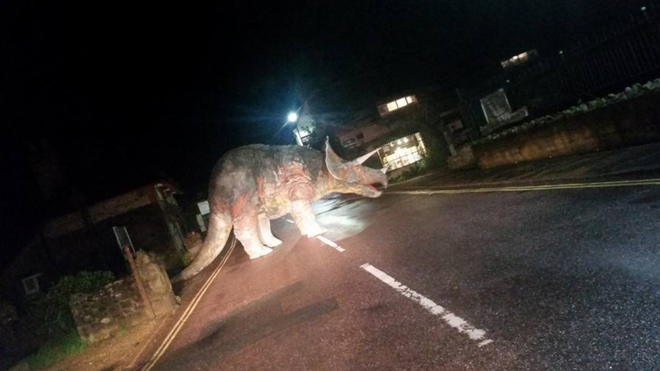 Triceratops in road!