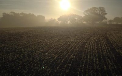 Autumn dawns at Skinners Farm